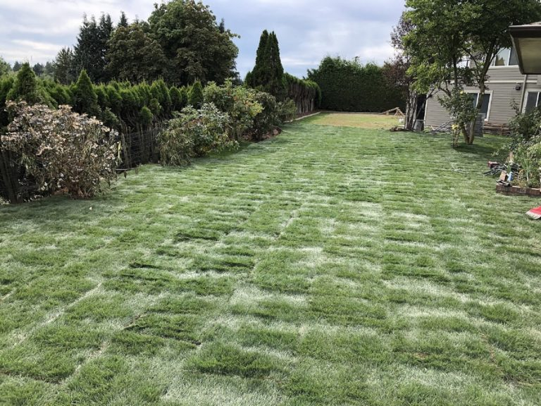 Landscape contractor turf installation